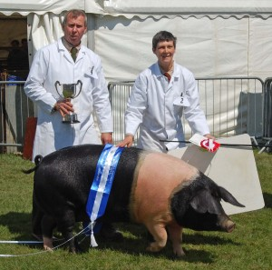 Oaklands Pigs Heathfield Champion